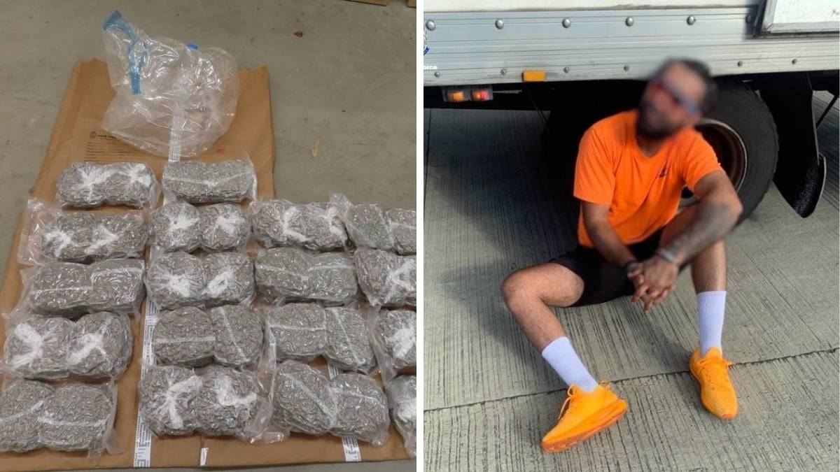 Police seized $3million worth of cannabis near Marulan. Picture: Supplied