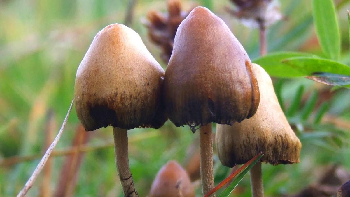 Drug regulators reconsider MDMA and magic mushrooms for rescheduling
