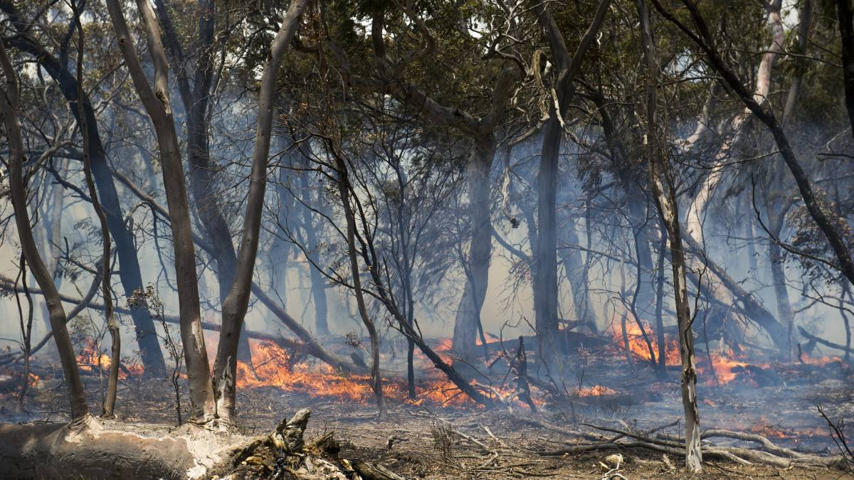 A backburn being conducted by farmers at Butmaroo Station. The bushfire royal commission heard controlled burning could have limited effect in certain areas. Picture: Dion Georgopoulos