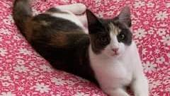 Cats missing following break in at RSPCA ACT overnight – The Canberra Times