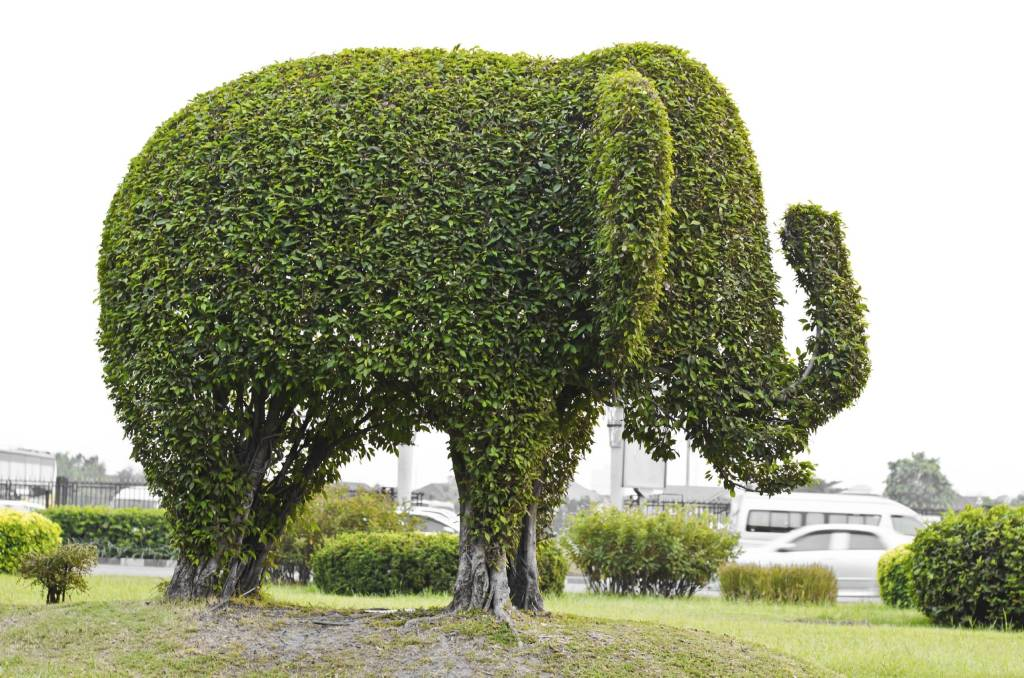 Topiary In Canberra Jackie French S Top Tips Are A Snip The Canberra Times Canberra Act
