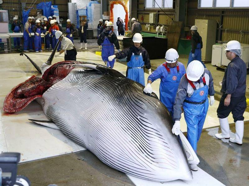 Japan commercial whaling law gets passed