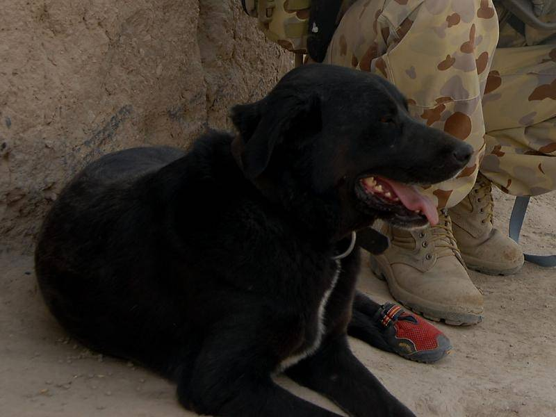 A new program will make specially-trained assistance dogs available to veterans experiencing PTSD.